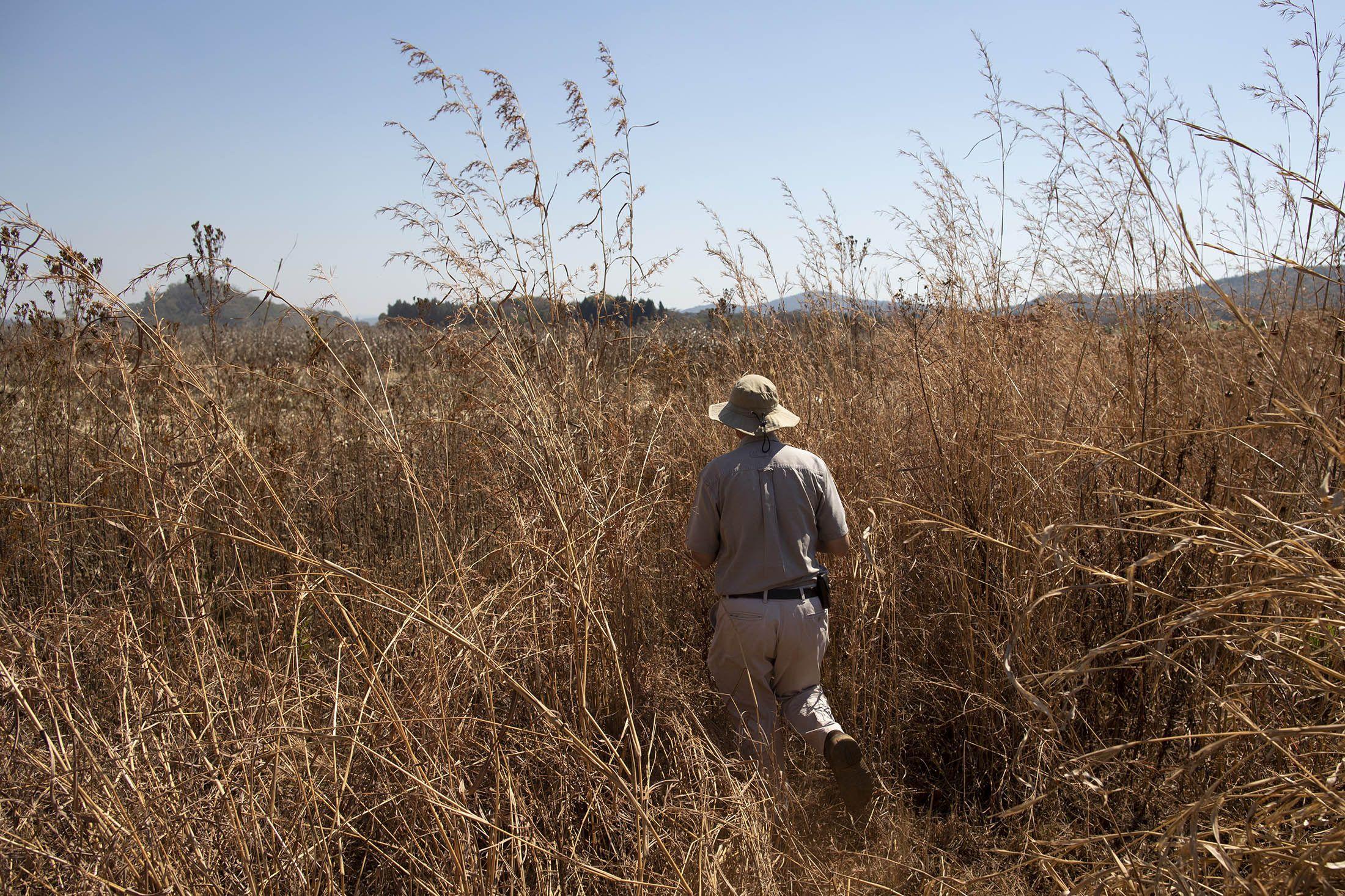 Business Maverick: Two Decades After Land Grab, Zimbabwe Starts Paying Farmers