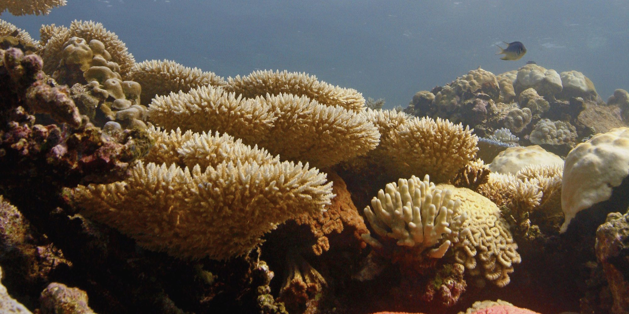World's coral scientists warn action is needed now to...World's coral scientists warn action is needed now to...