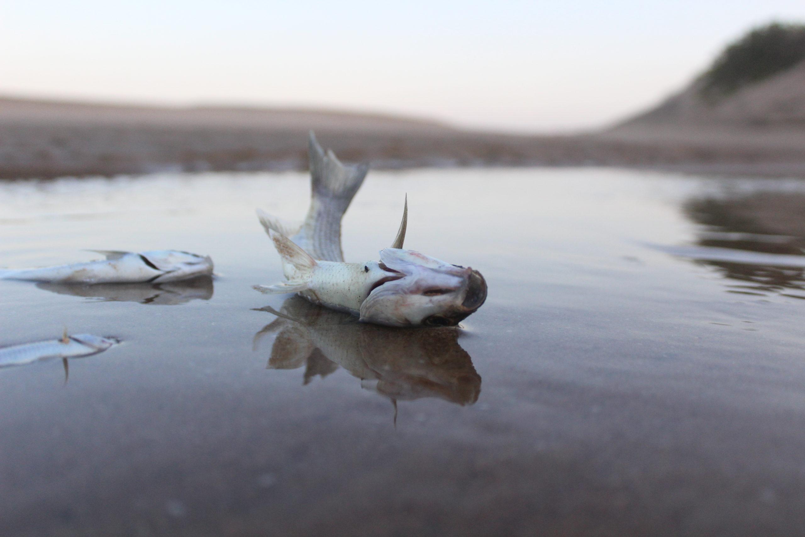 upl dead fish