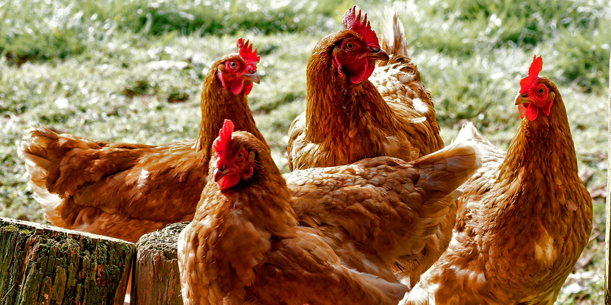 Business Maverick: Industry master plan: Not a chicken in every pot, but a lot more pots