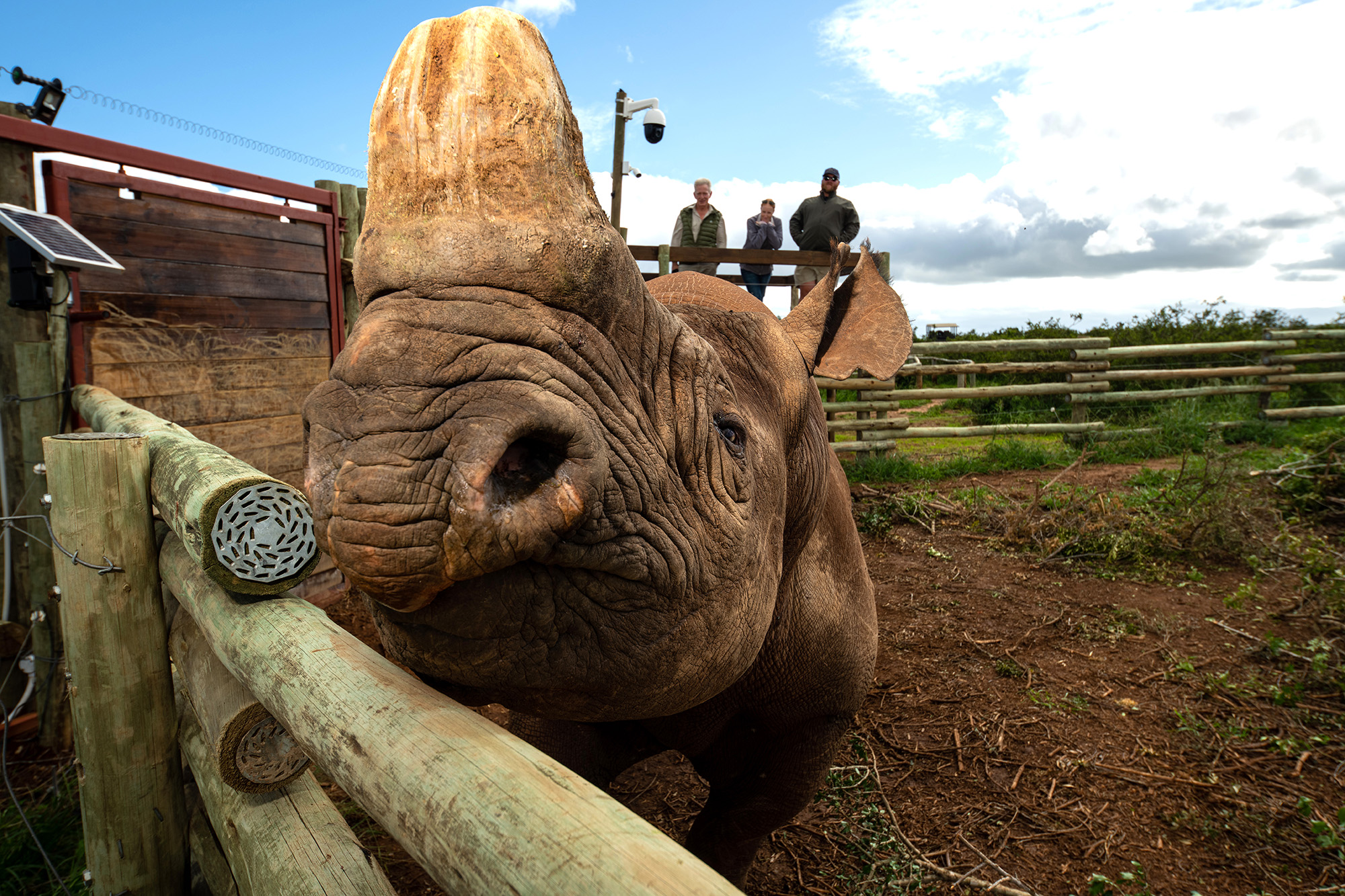 OUR BURNING PLANET 168: Seeing conservation through a blind rhino's eyes