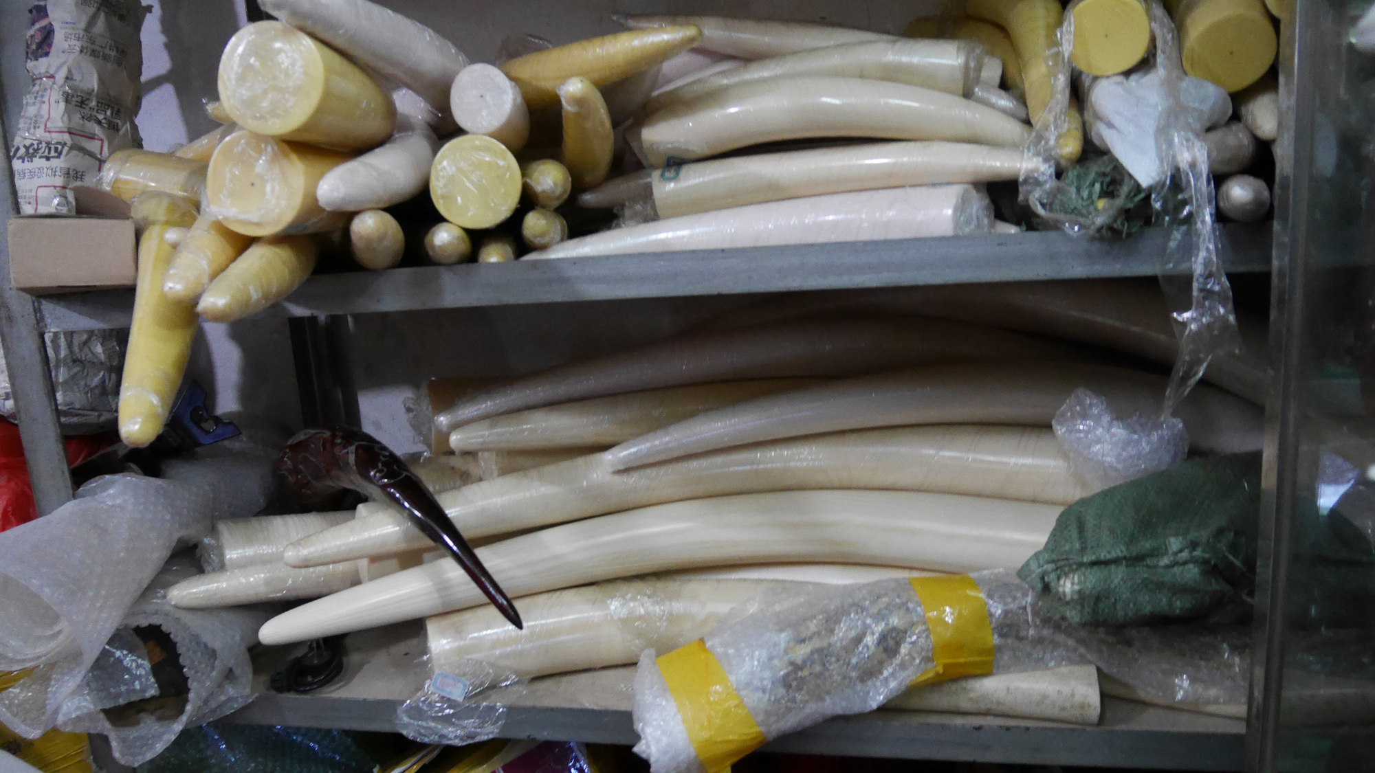China: The Real Ivory Game
