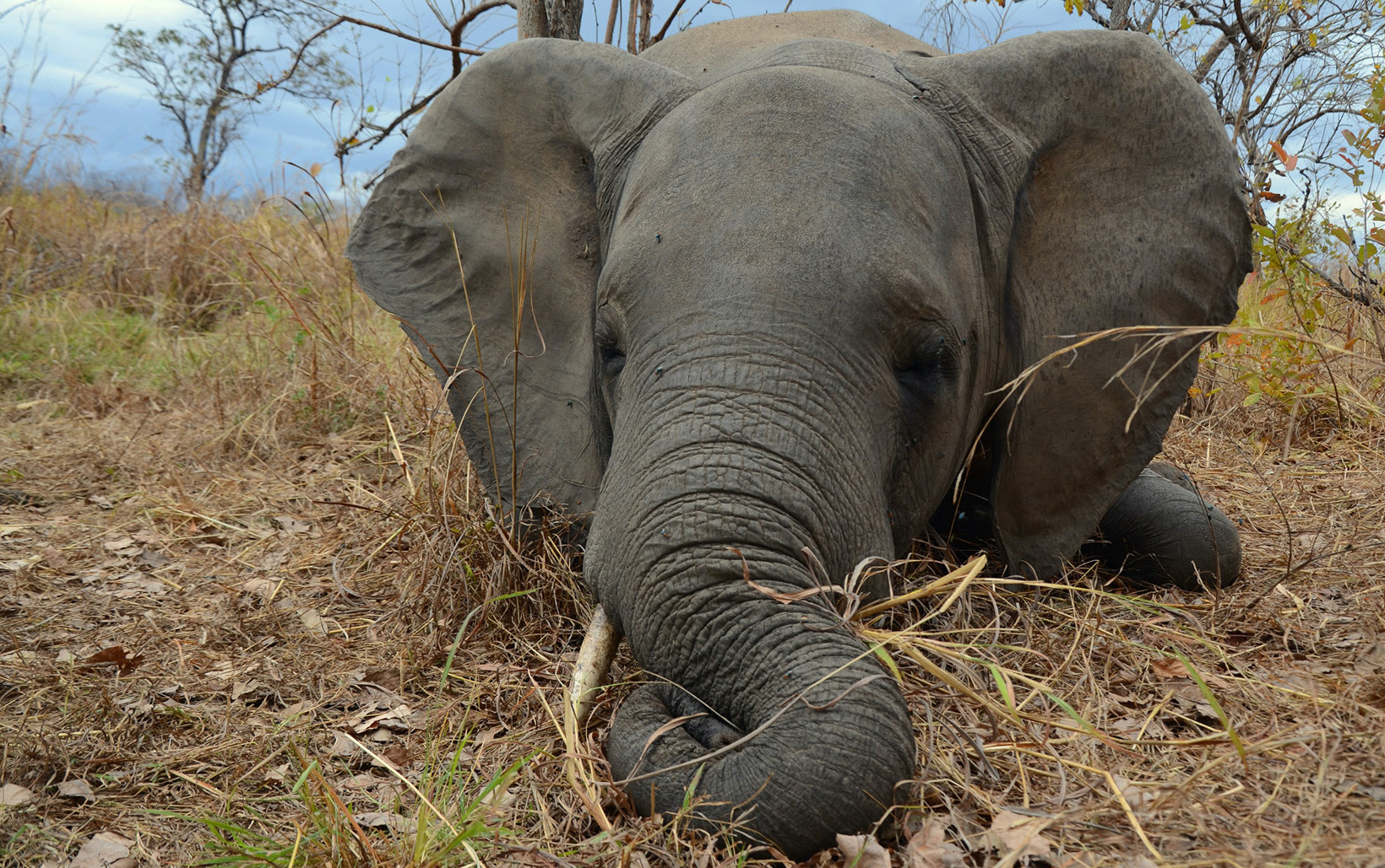 OP-ED: Why poaching has decreased dramatically in Mozambique's Niassa Reserve