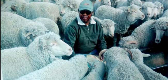 The tangled web of the Lesotho Wool War