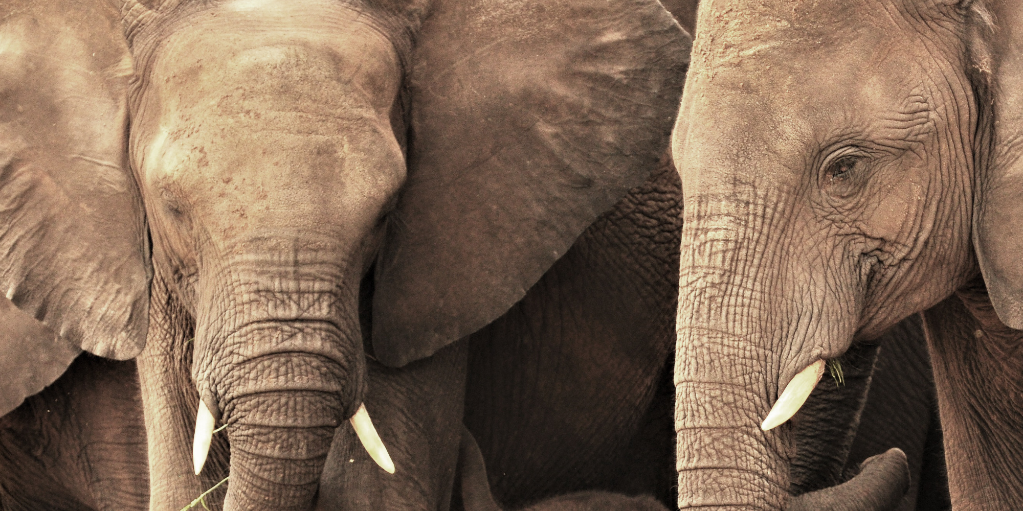 LETTER TO THE EDITOR: Elephants are not human — they are animals, and all animal populations need to be managed