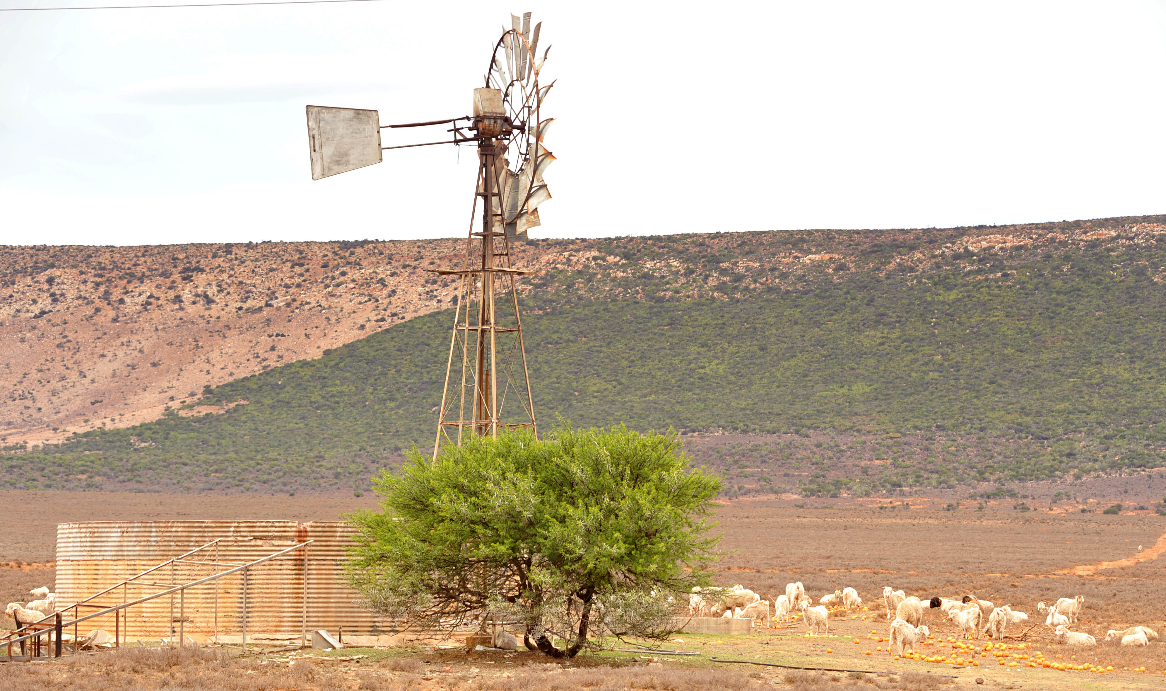 Parched province faces losses of over R6bn