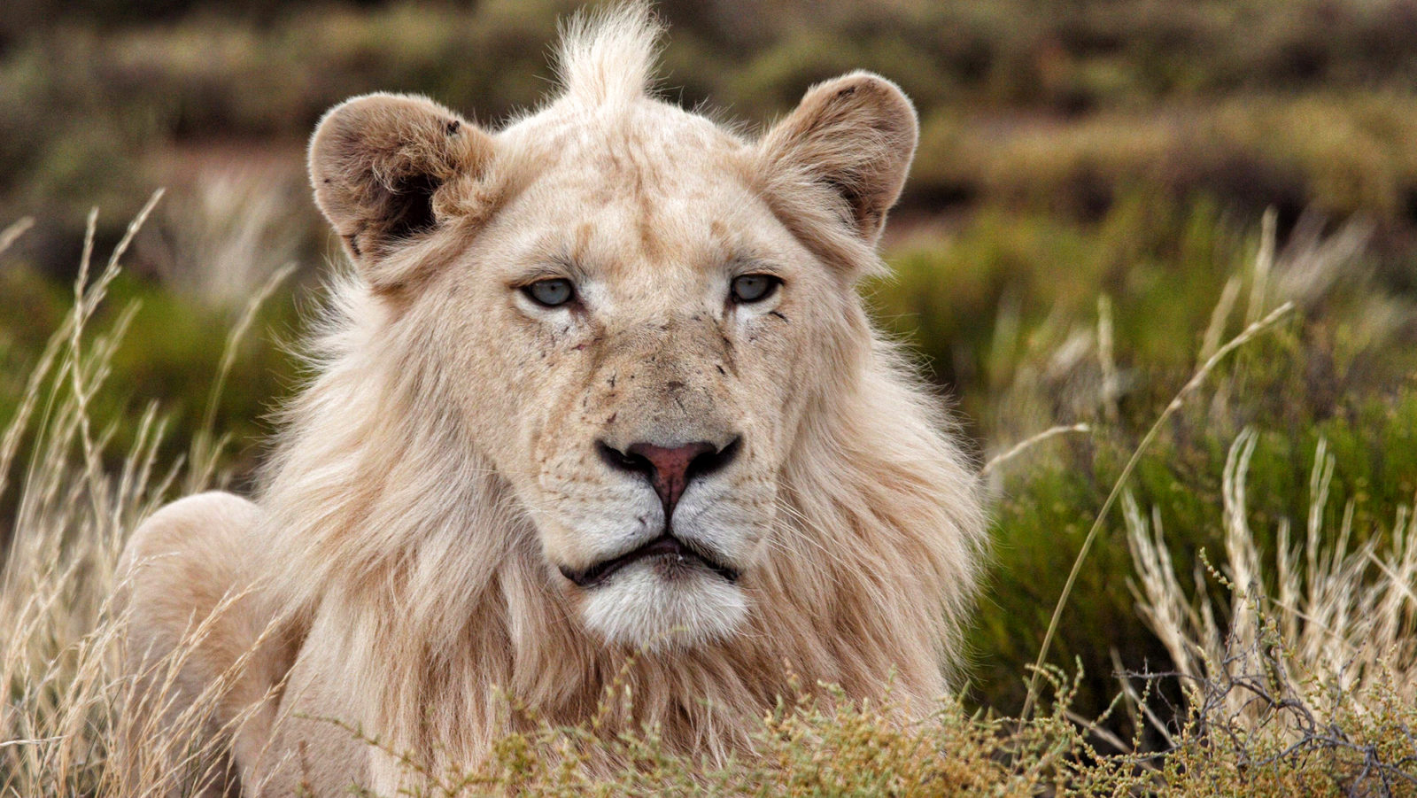 Trophy Hunting, Part One: The Nasty Colonial Sport Of S