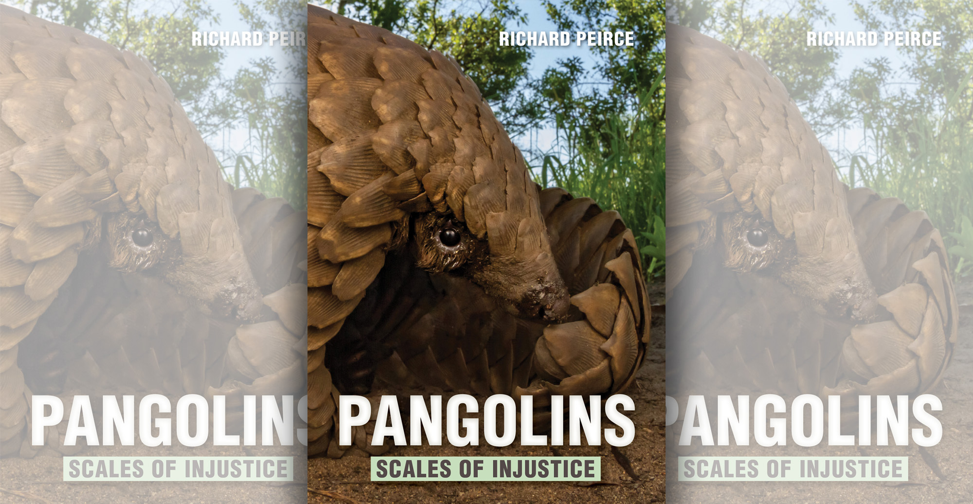 BOOK EXTRACT: Pangolins: Scales of Injustice by Richard Peirce