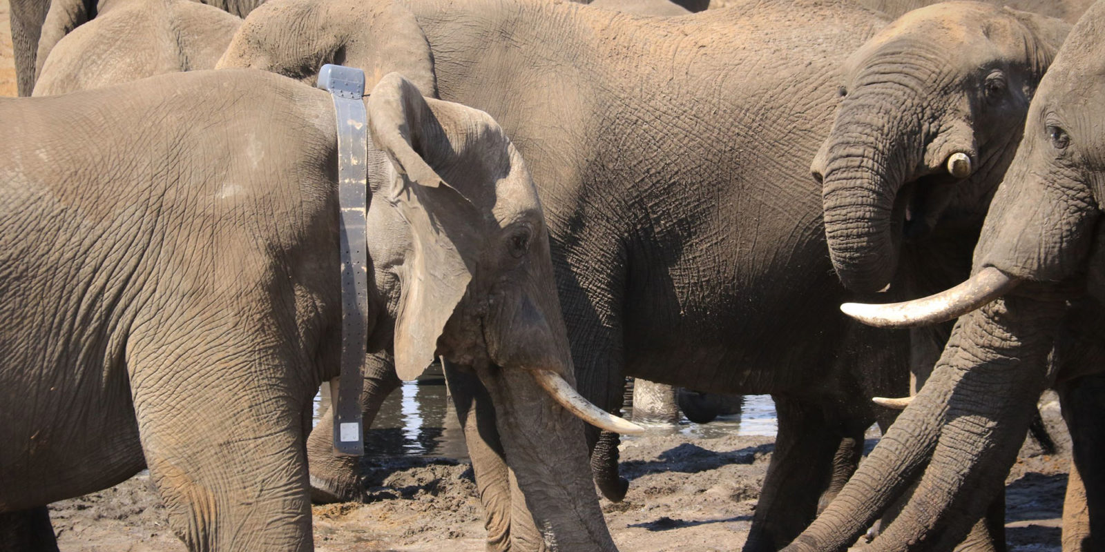 Outrage over 'unethical' Botswana elephant hunt