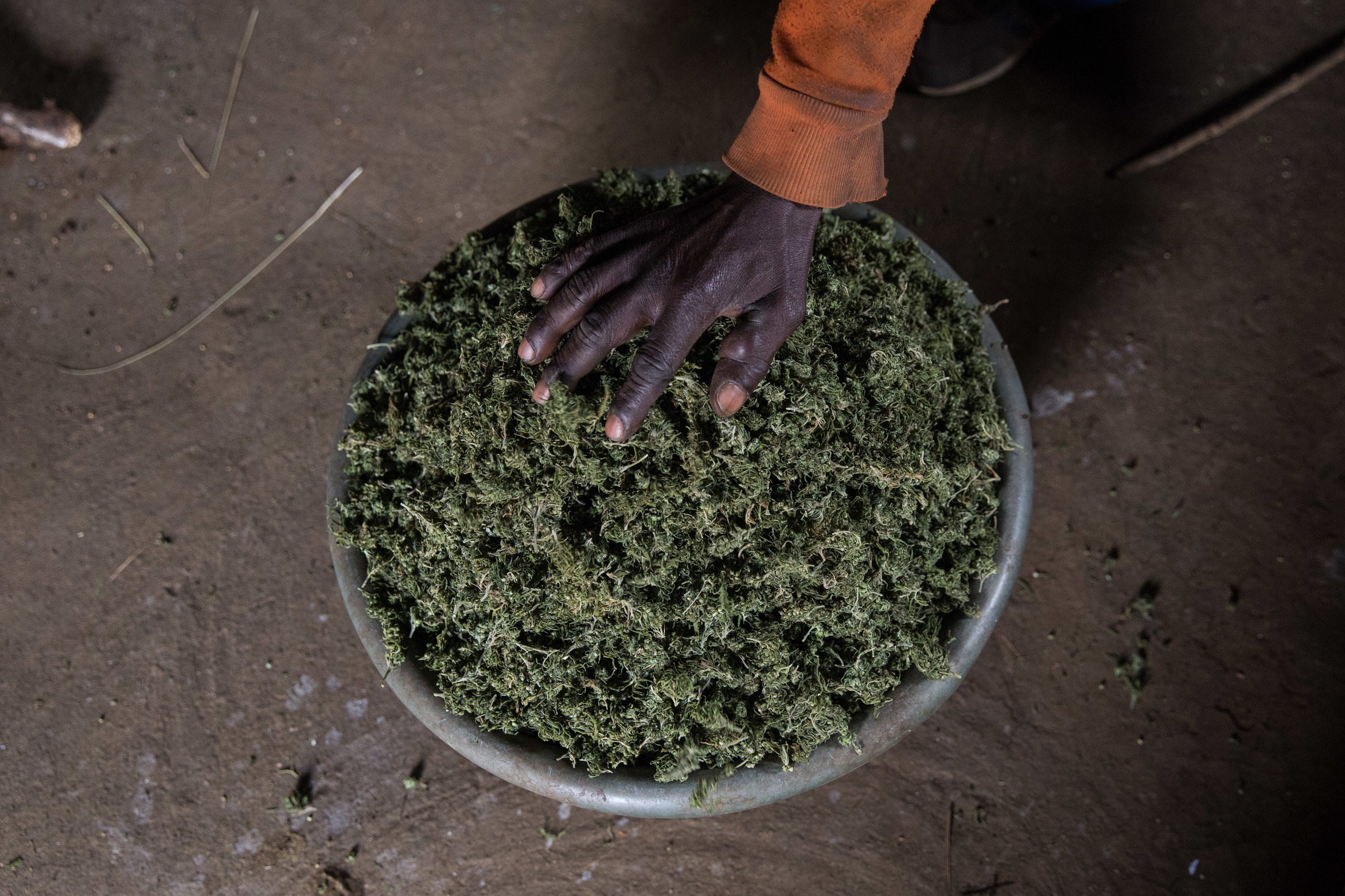 Dagga prohibition needs to end