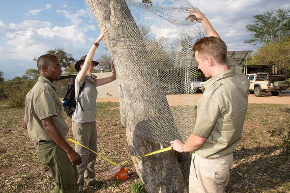 Pungent potions deployed to stop elephant tree-muggers