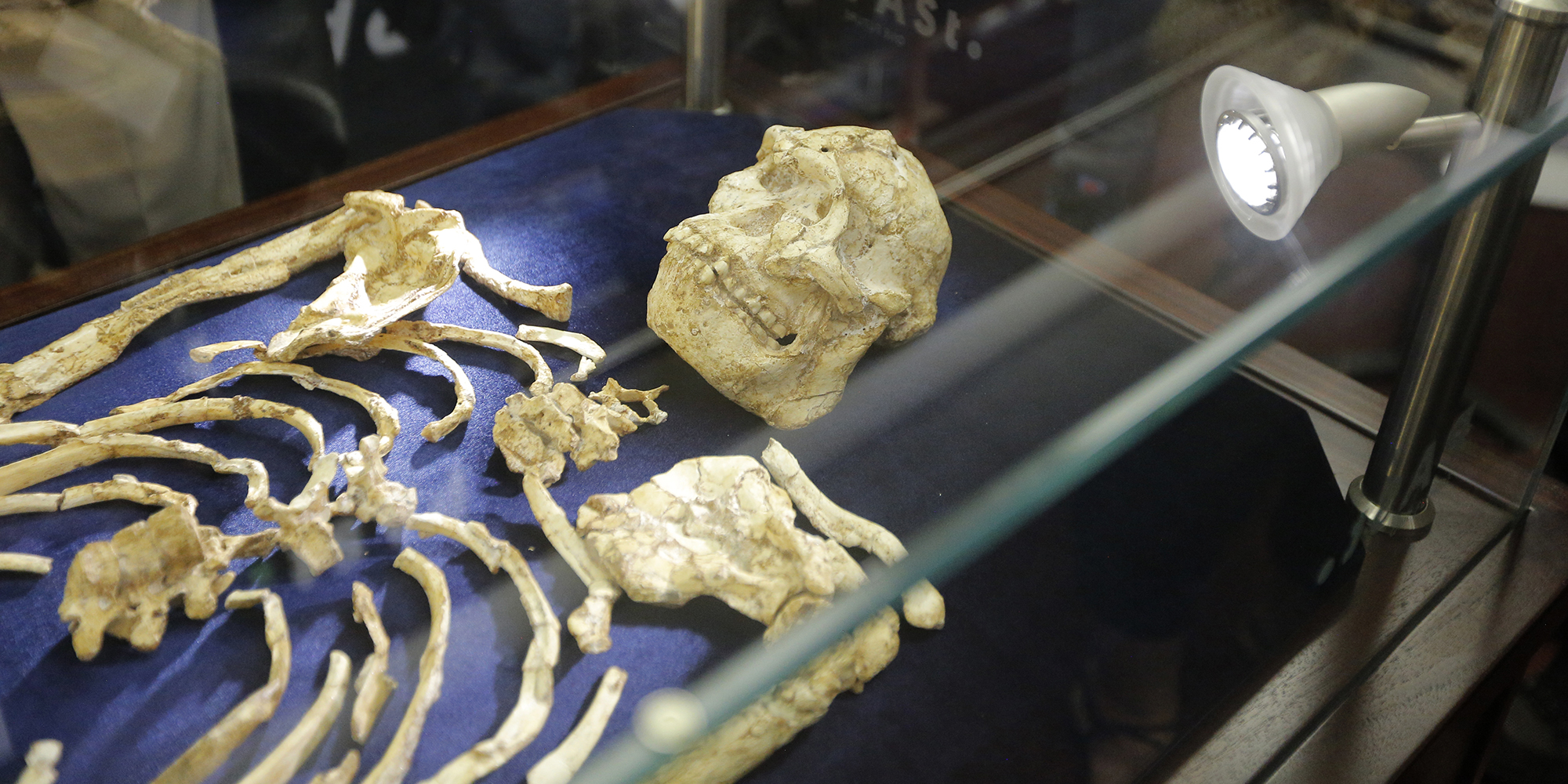 Something to chew over: Scientists get into the skull of 3.6 million-year-old Little Foot - Daily Maverick