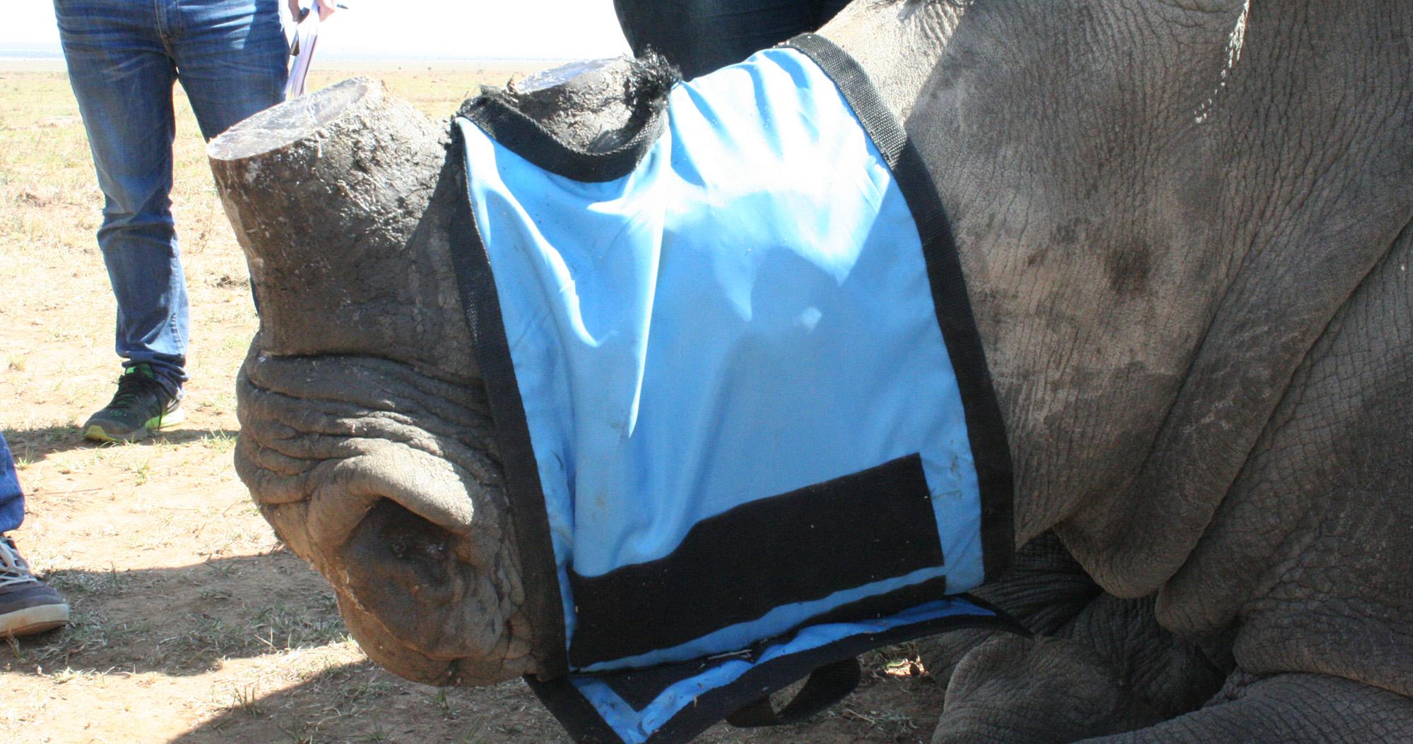 TonyC rhinohornsale main option 2.'