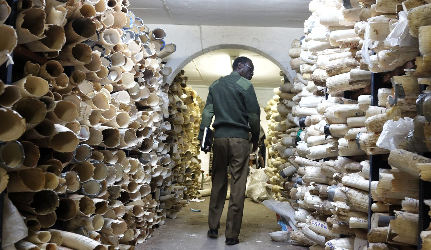 Ivory sales: Fast-track to elephant extinction?