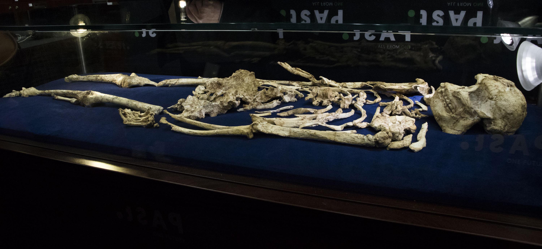 SA's most complete human ancestor — a bone of conte