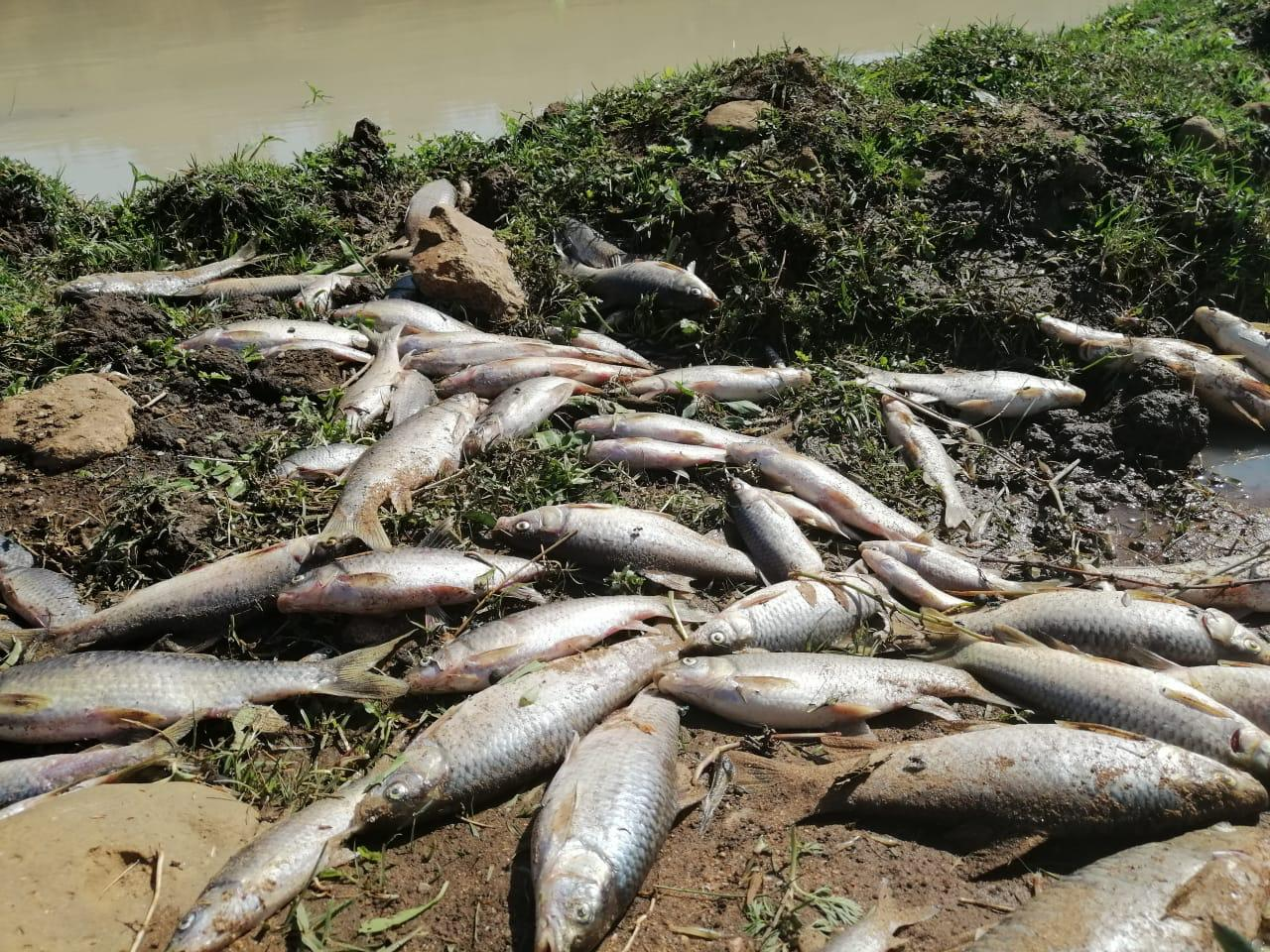 Rampfonds benodig om KZN-riviervulling skoon te maak - Daily Maverick