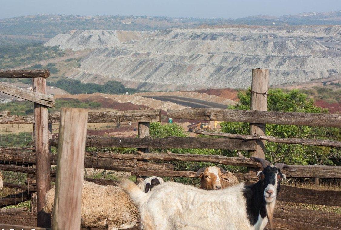 Die steenkoolmyn langs die wildreservaat staar 'n wettige uitdaging in die gesig - Daily Maverick