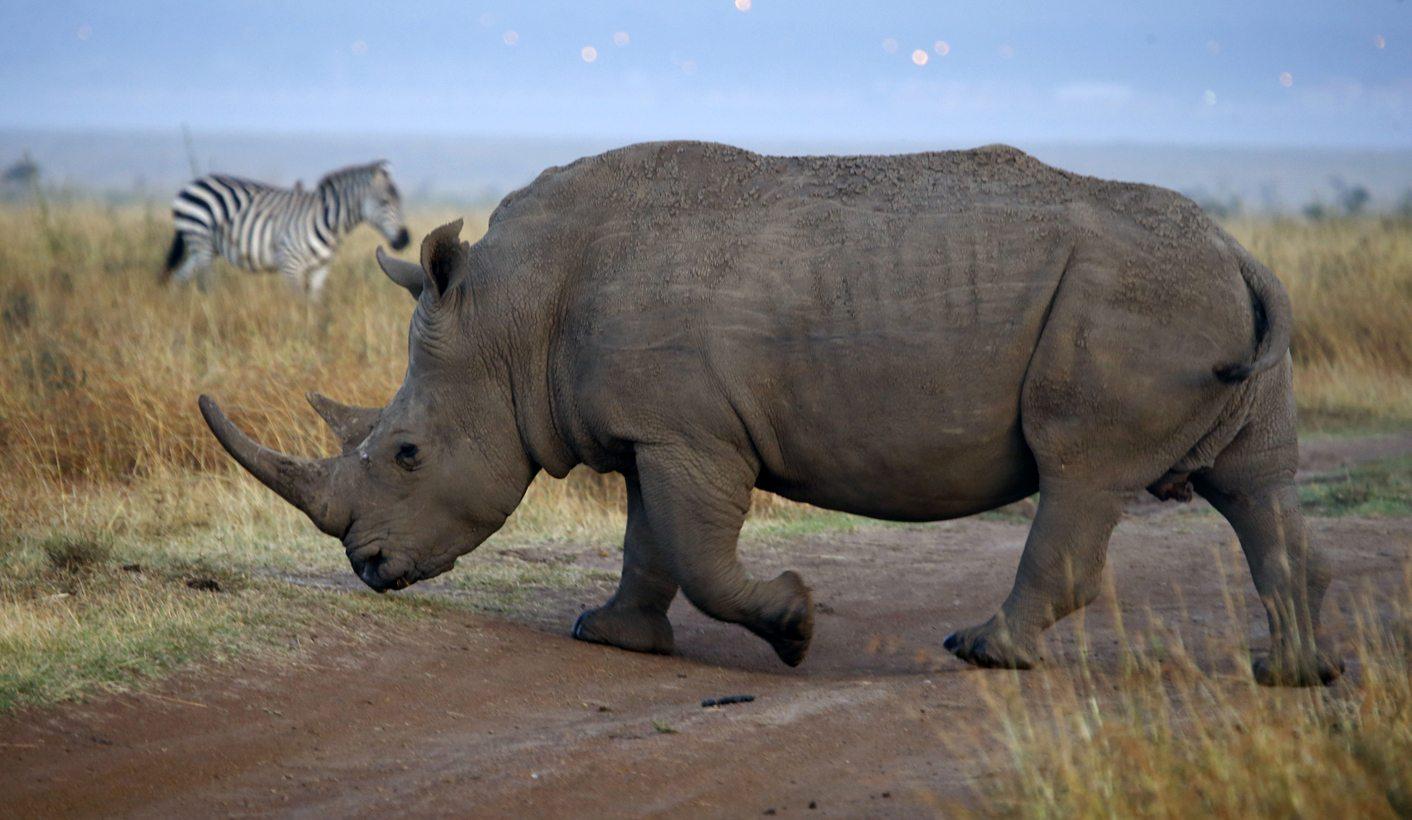 Grumpy Old Man's Guide To Saving The Rhino