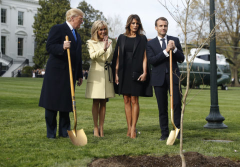 Trump and Macron planted a tree — but where did it go?