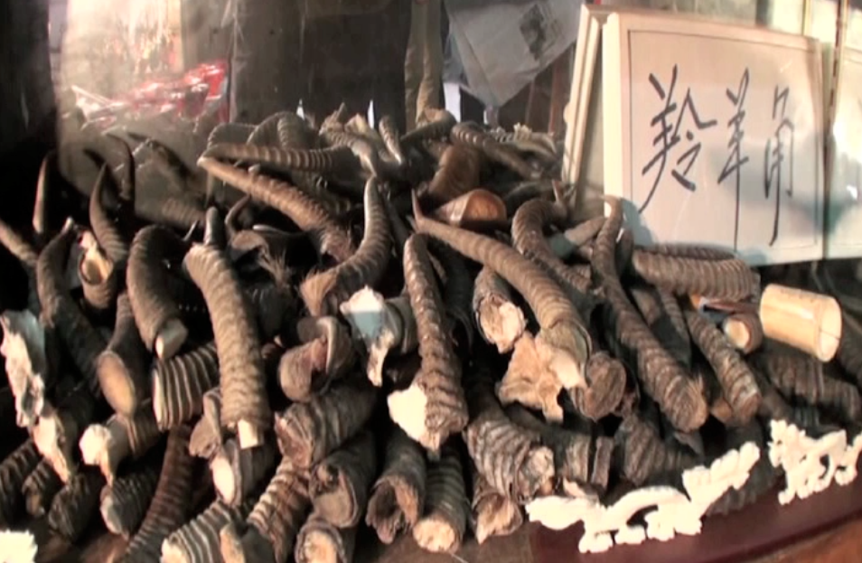 On the trail of Asia's shifting rhino-horn market
