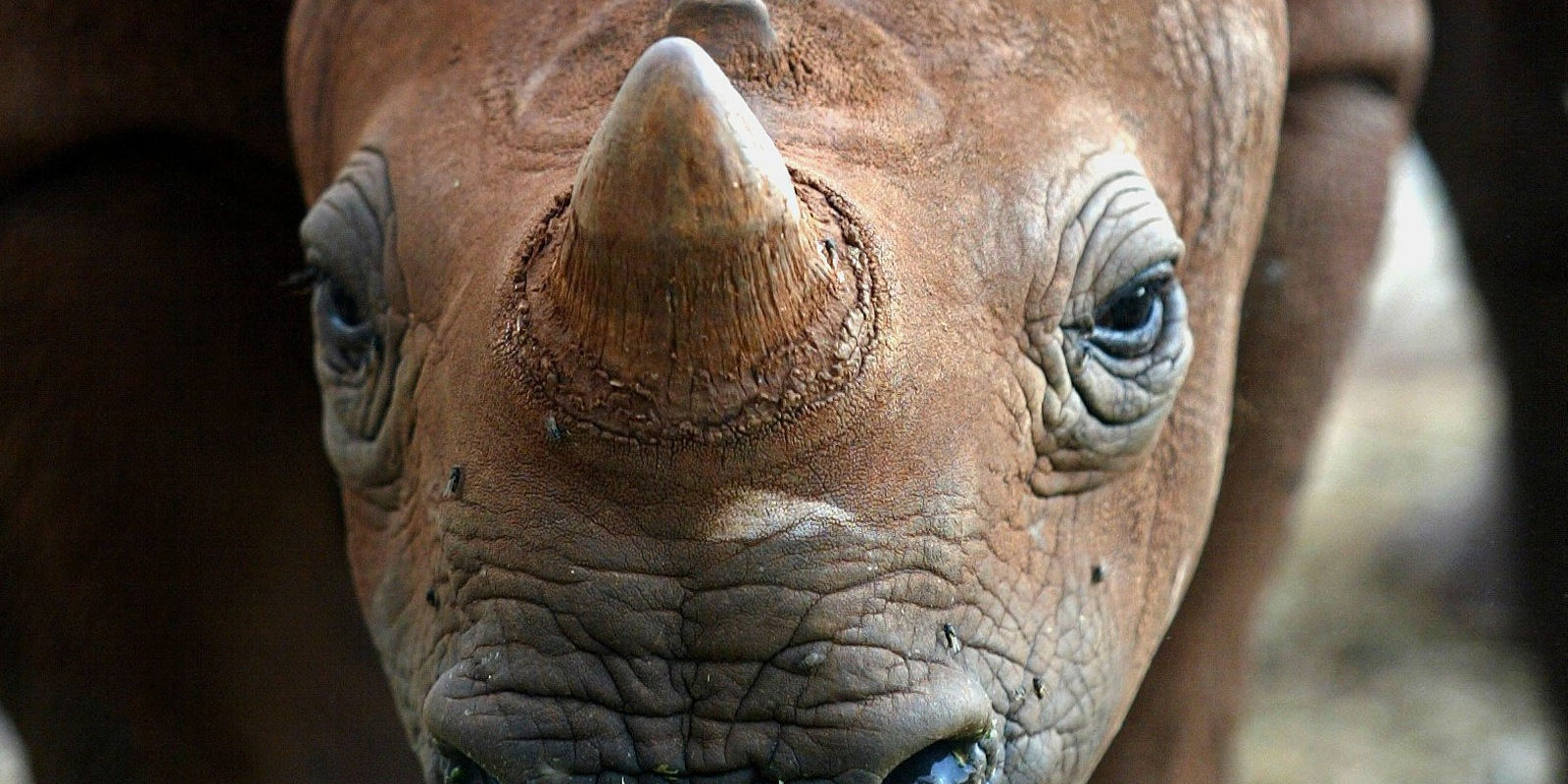 South Africa pushes for trade in endangered wildlife