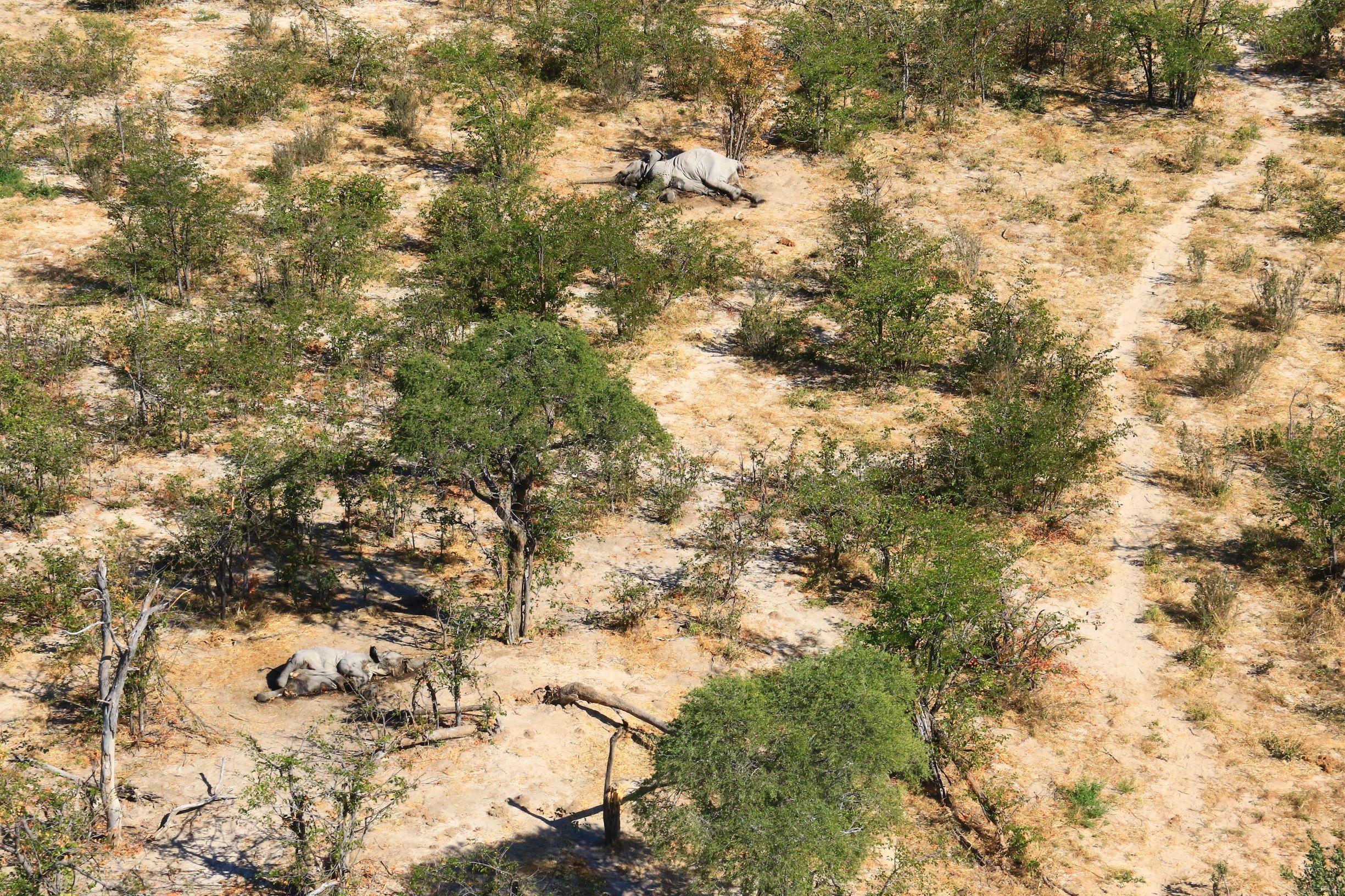 Over 400 Botswana elephants killed in mystery mass die-off - Daily Maverick