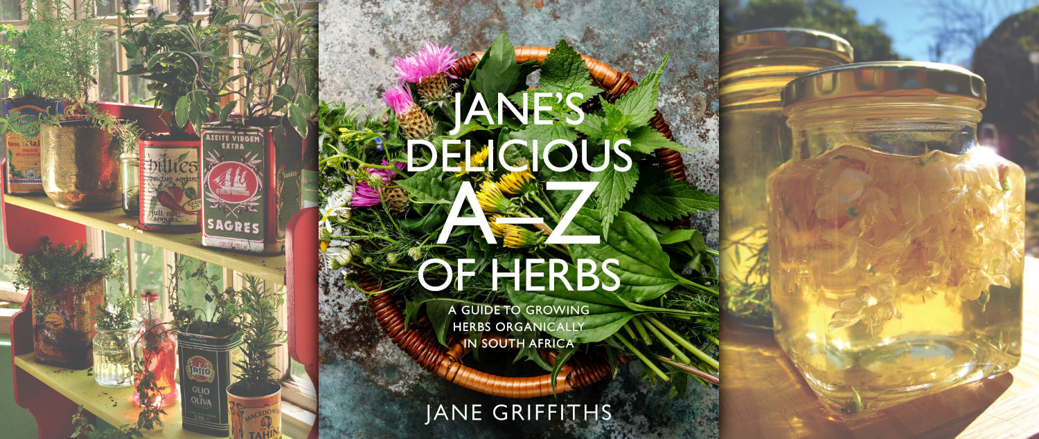 MAVERICK LIFE: BOOK: Book Excerpt: Grow, harvest and preserve your own herbs, with or without a backyard patch.
